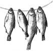 Вяленая рыбка из Астрахани